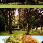 Point N°5.<BR>Le parc du Domaine de Nivezé : ce parc et le grand bâtiment, appartiennent aujourd'hui à la Mutualité Chrétienne. Les promeneurs sont tolérés mais si vous avez un chien, gardez le en laisse.