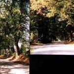 Point n°9.<BR>Comme d'autres routes qui mènent de Spa vers les Sources, la route du Tonnelet est bordées par de magnifiques tilleuls datant du XVIIIème siècle.