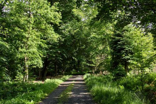 Le bois de la Géronstère (Photo @Bernard Meeus – http://bernardmeeus.wordpress.com/)