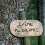Chêne al bilance
