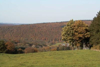 Vue sur la forêt de Staneux