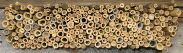 Tiges creuses de bambous (diamètres intérieurs de 2 à 12 mm)