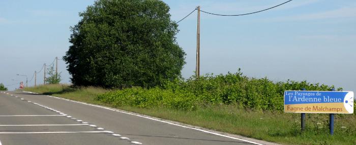 La renouée du Japon à Malchamps sur les hauteurs de Spa. L'envahissement est bien visible sur le bas côté de la route nationale Spa - Francorchamps.