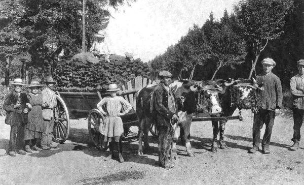 1900 : Des « troufleûrs » de retour des fagnes (extrait de « Petite histoire sartoise », M. Carmanne)
