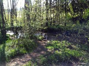 Le Wayai en amont du lac (Photo gilbert Lefin - Im@geur)